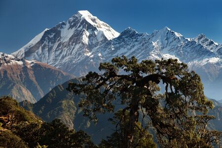 panoramatic view from Jaljala pass of Dhaulagiri and Annapurna Himal  Guerrilla trek in Western Nepal