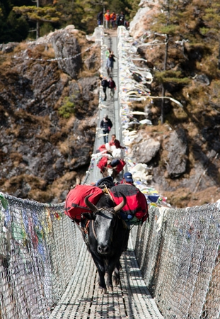 bazar: Yaks and people on hanging suspension bridge on the way to Mount Everest base camp near Namche Bazar  Nepal