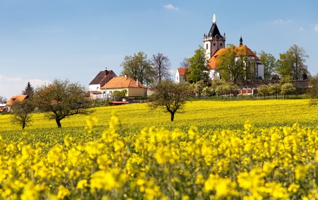 napus: church and golden rapeseed field brassica napus plant for green energy and oil industry - Budisov village, Czech Republic Stock Photo