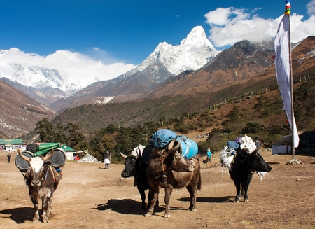 nepali: yaks with goods on the way to Everest base camp and Ama Dablam, Lhotse, Nuptse and top of Everest
