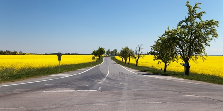 napus: Panoramic view of rapeseed brassica napus field and road