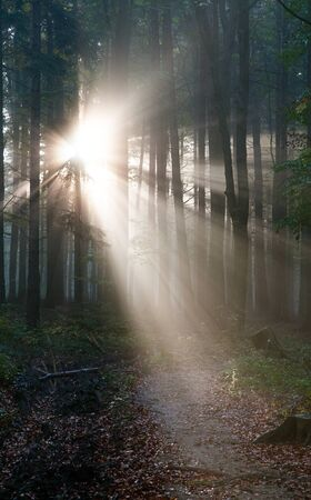 broad leaved tree: View from wood with contreyour sun rays