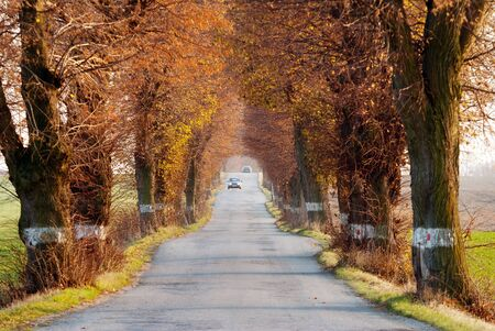 road autumnal: autumnal view of road with car and beautiful old alley of lime tree