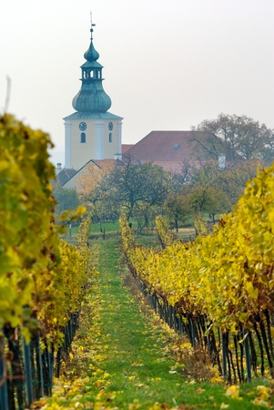 wineyard: View of church in autumnal wineyard