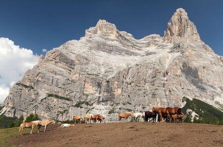 pastureland: Cows and horses under Monte Pelmo in Italian Dolomities