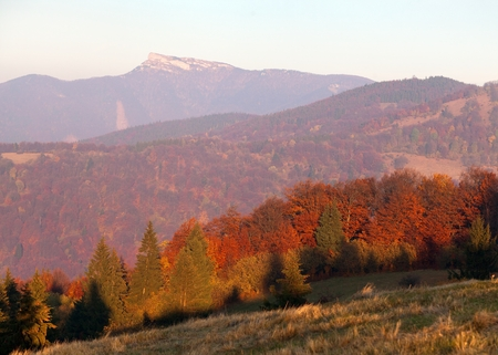 broad leaved tree: Evening utumnal view of mount Klak, Mala Fatra, Strazovske vrchy, Slovakia