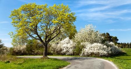 albero da frutto: alberi Vista primavera, stradali e da fiore Archivio Fotografico
