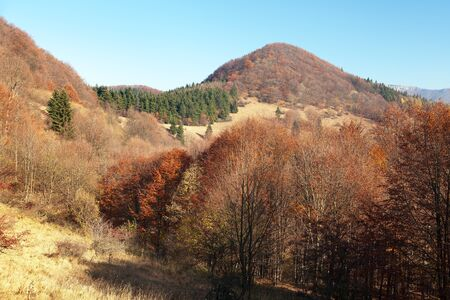 broad leaved tree: Autumnal view from Strazovske vrchy, Carpathian mountains, Slovakia