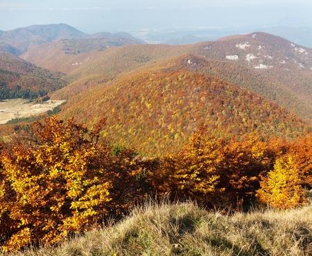 broad leaved tree: View from mount Strazov, Strazovske vrchy, Slovakia Stock Photo
