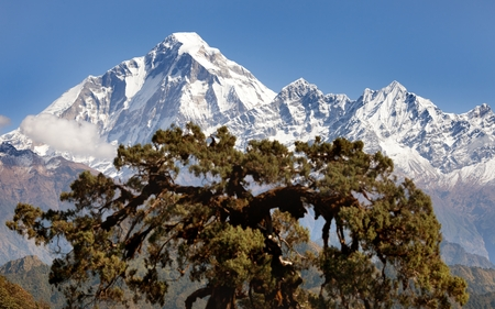guerrilla: panoramatic view from Jaljala pass to Dhaulagiri Himal - Guerrilla trek in Western Nepal Stock Photo