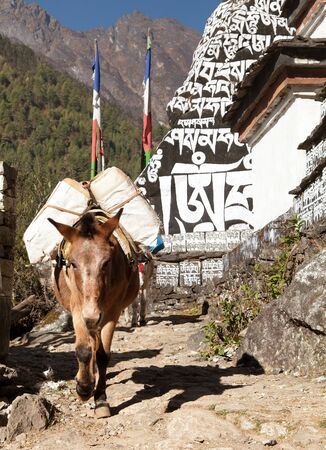bazar: Buddhist prayer mani walls and mule, khumbu valley, way from Lukla to Namche Bazar, Nepal