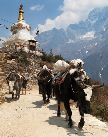 View of caravan of yaks and stupa - way to Everest base camp - Sagarmatha national park - Nepal