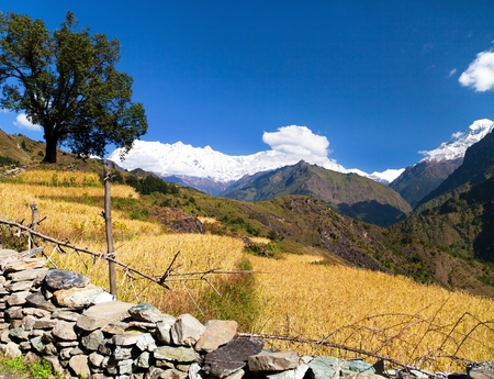 Rice field under Dhaulagiri Himal and snowy Himalayas mountain in Nepal Stock Photo