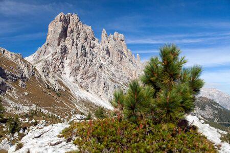 italien: Small pine tree and stone and Cima Ambrizola and Clroda da Lago, Italien dolomites Stock Photo