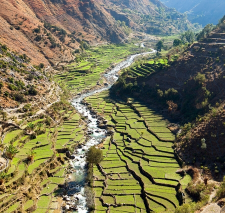 Beautiful terraced rice field in valley around river, green rice field or paddy field in western Nepal, asian rice, Oryza sativa
