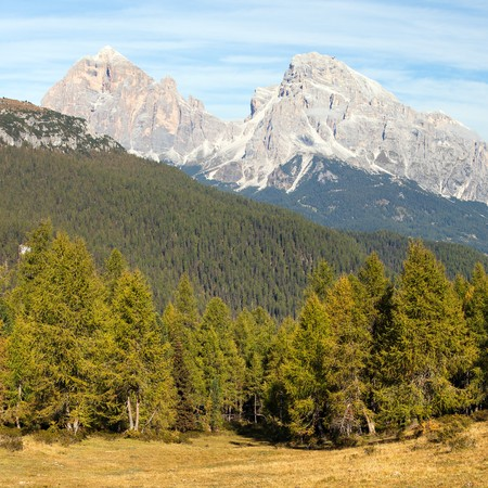 View of larch wood and Le Tofane Gruppe, Dolomiti, Italy