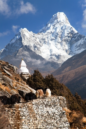 sierra: View of Ama Dablam with stupa and caravan of yaks - way to Everest base camp - Sagarmatha national park - Nepal