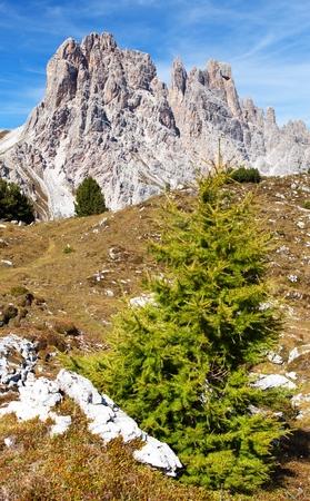 alpen: Larch wood and Cima Ambrizzola and Clroda da Lago, tIalien dolomites Stock Photo