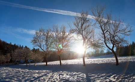 wintry view with alley of tree and sun on beautiful sky