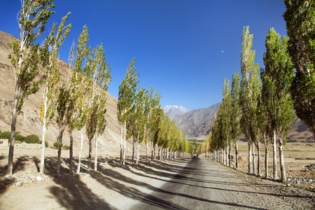Pamir highway, road and alley of poplar trees and Pamir mountains, Wakhan corridor and valley, Gorno-Badakhshan region, Tajikistan and Afghanistan border, roof of the world Stock Photo - 123494300