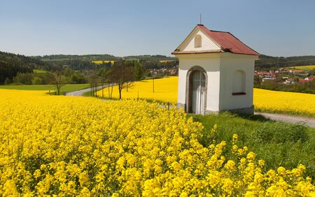 Field of rapeseed, canola or colza, in latin Brassica Napus and small white chapel and road, rape seed is plant for green energy and oil industry, springtime golden flowering field