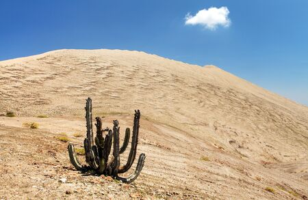 Cerro Blanco sand dune with cactus, one of the highest dunes on the world, located near Nasca or Nazca town in Peru