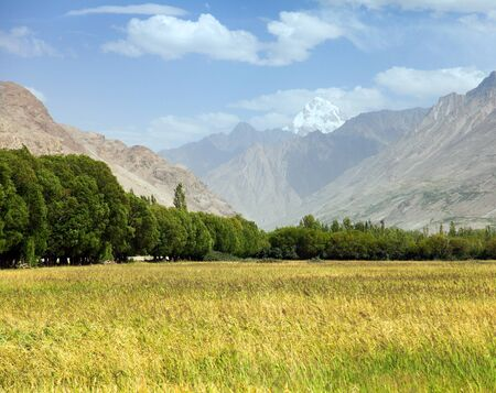 cereal field in Wakhan valley, Hindukush mountains, Gorno-badakhshan region, Tajikistan and Afghanistan border Stock Photo