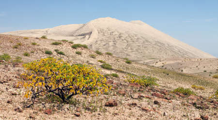Cerro Blanco sand dune with tree, one of the highest dunes on the world, located near Nasca or Nazca town in Peru Stock fotó
