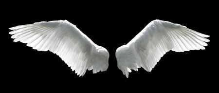 pluma blanca: Alas de ángel aislados sobre el fondo negro.