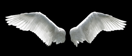 birds: Angel wings isolated on the black background.