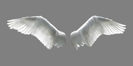 ali angelo: Ali d'angelo isolato su sfondo grigio. Archivio Fotografico