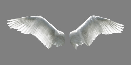 isolated on grey: Angel wings isolated on gray background. Stock Photo