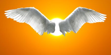 Angel wings with background made of sunset sky and sun.