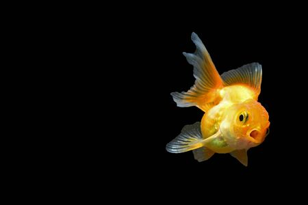 One of the most popular fish species feed
