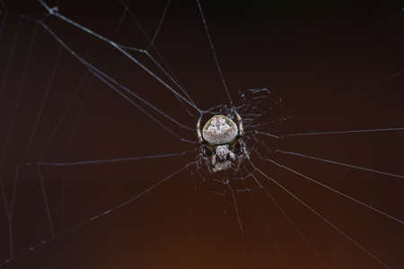 Spider on the spider web, Close up Stock Photo