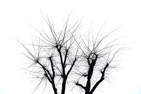 Branches on a white background.