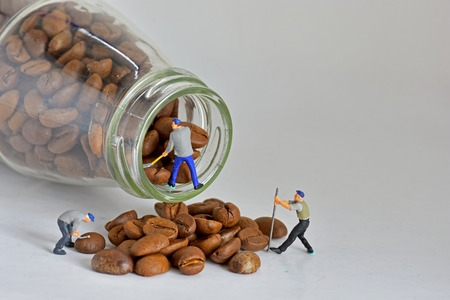 Concept, Small Workers Working With Coffee Beans, Sorting coffee beans
