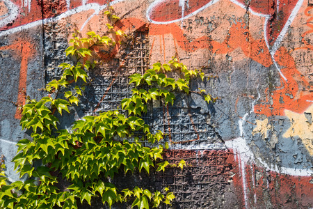 Power of nature, growing plant destroying the wall with graffity Stock Photo