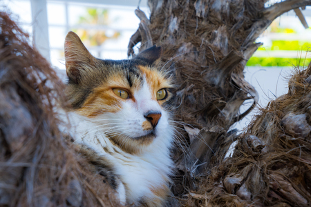 Wild lazy cat, lounging cat on the palm tree