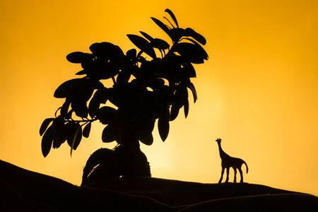 sunset tree: Safari in Africa, orange sunset, tree with toy giraffe Stock Photo