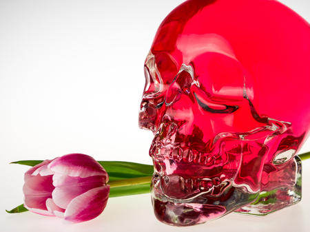Red crystal skull, glass brainpan with pink tulip flower