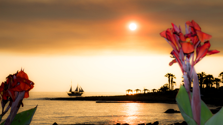 Beach sunset with red flowers and sailing vessel and background, Cyprus Stock Photo