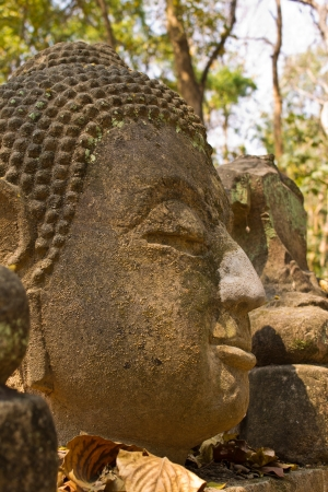 blissfull: Buddha head In Wat Umong Chiangmai