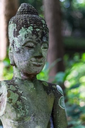 blissfull: Buddha head In Wat Umong Chiangmai , Thai