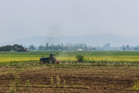agriculture industrial: Agriculture plowing tractor on wheat cereal fields