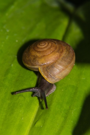 In the green leaves on snails crawl photo