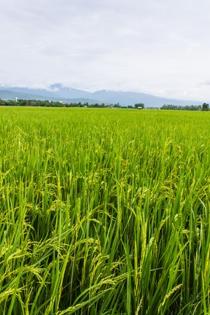 Ridge, mountain and rice field in Thailand photo