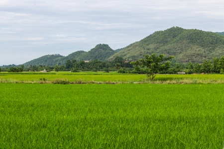 mountain and green rice field in Thailand photo