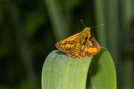 Butterfly on a blade of grass photo