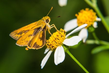 Butterfly feeding on little flower photo